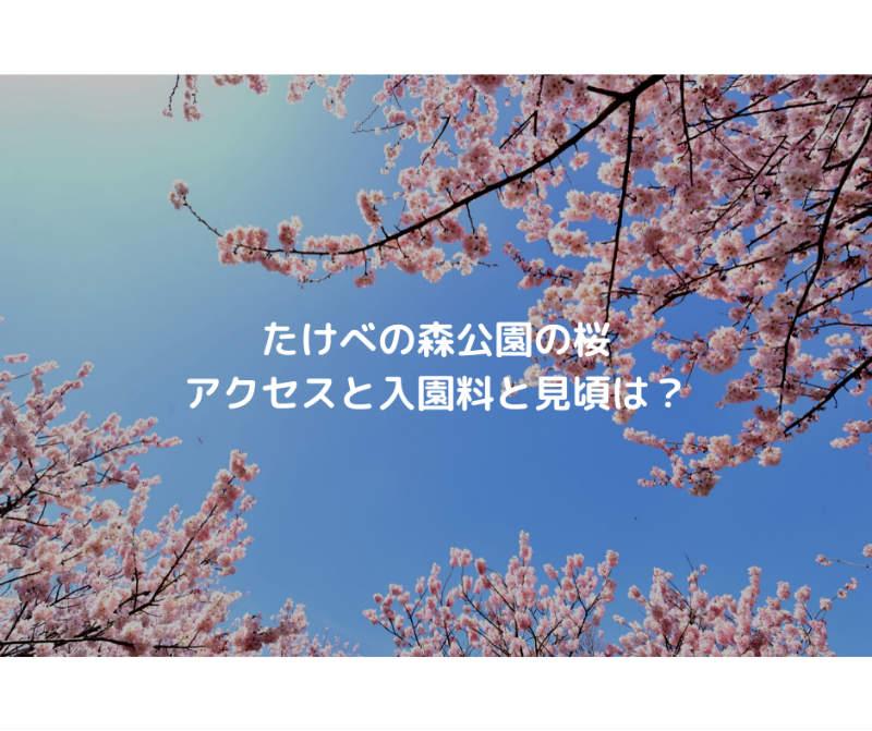 たけべの森公園の桜 アクセスと入園料と見頃は?
